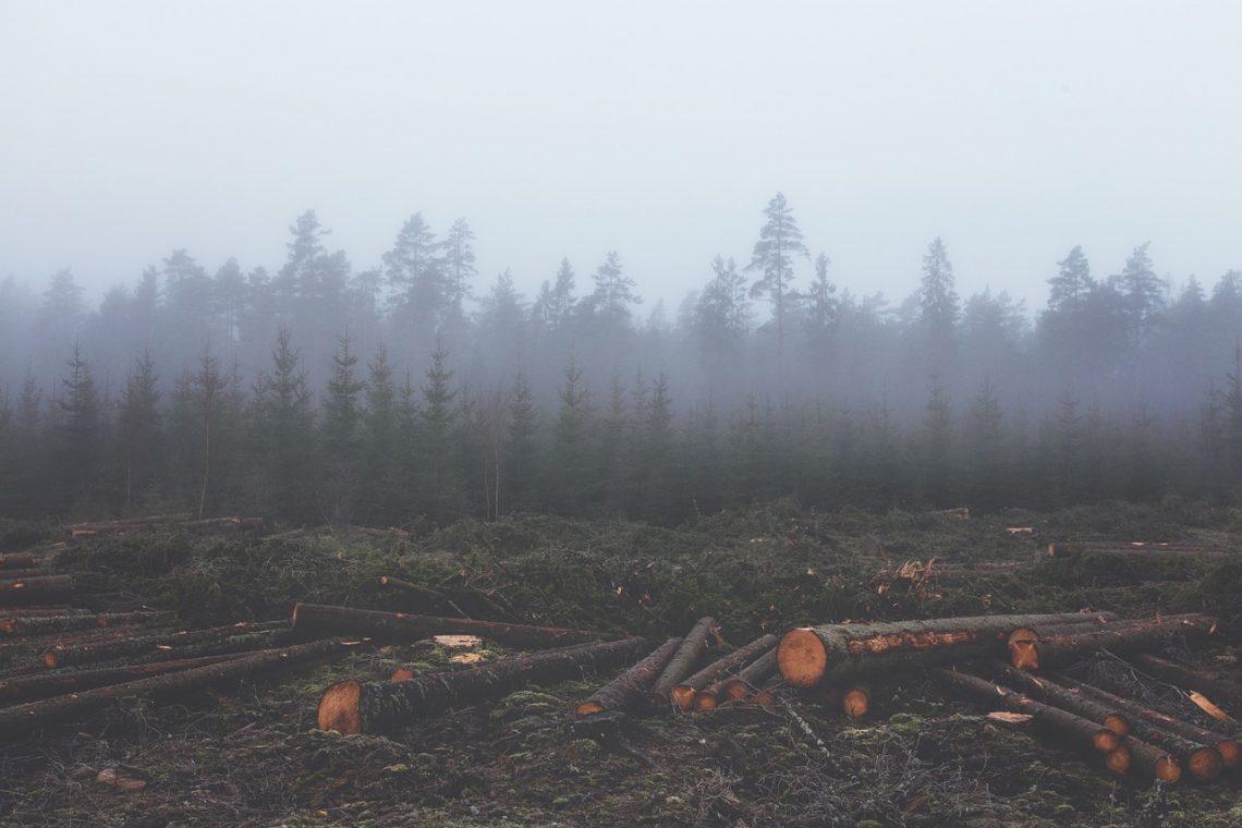 planeta sofre de esgotamento de recursos naturais 2019